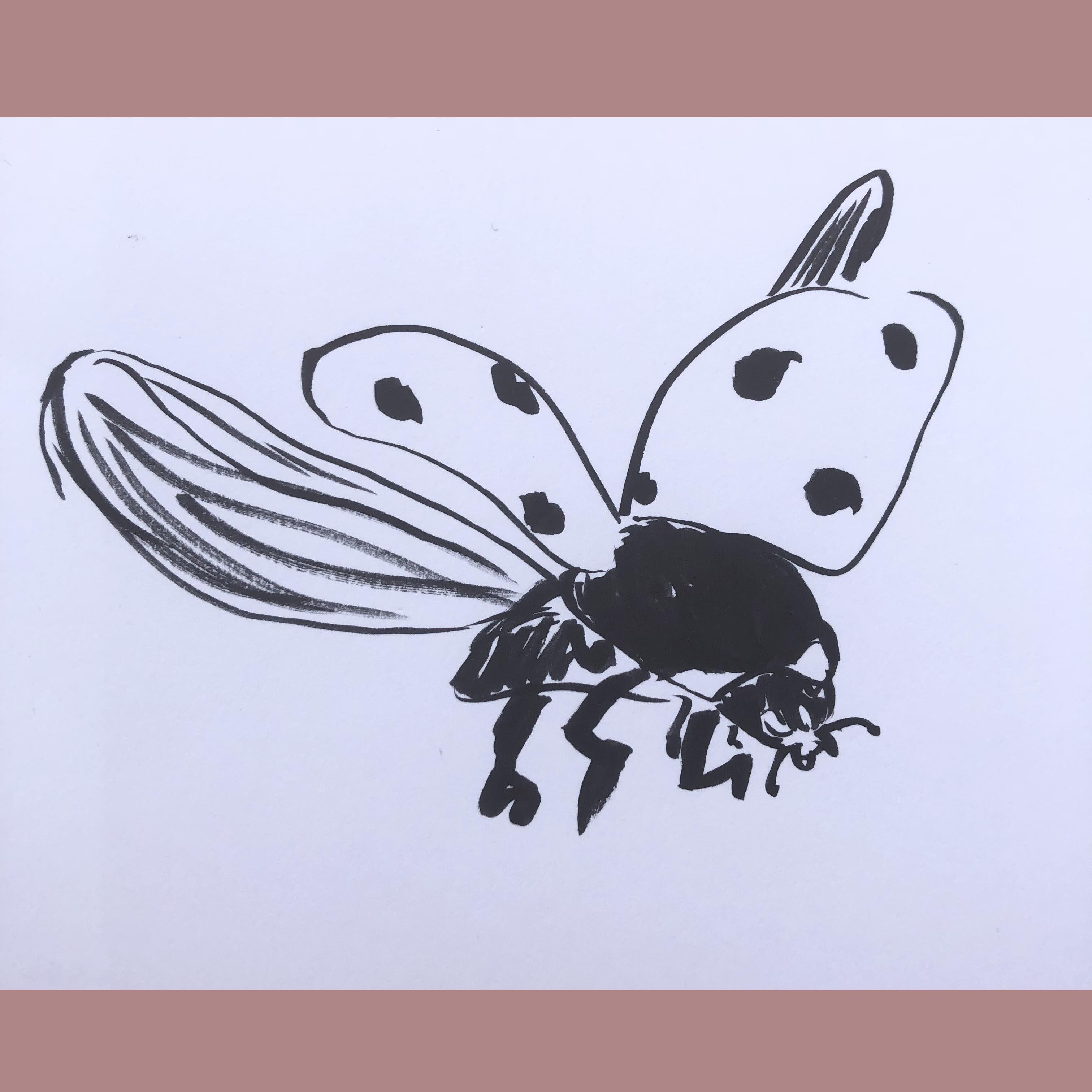 collezione-bugs-schizzo