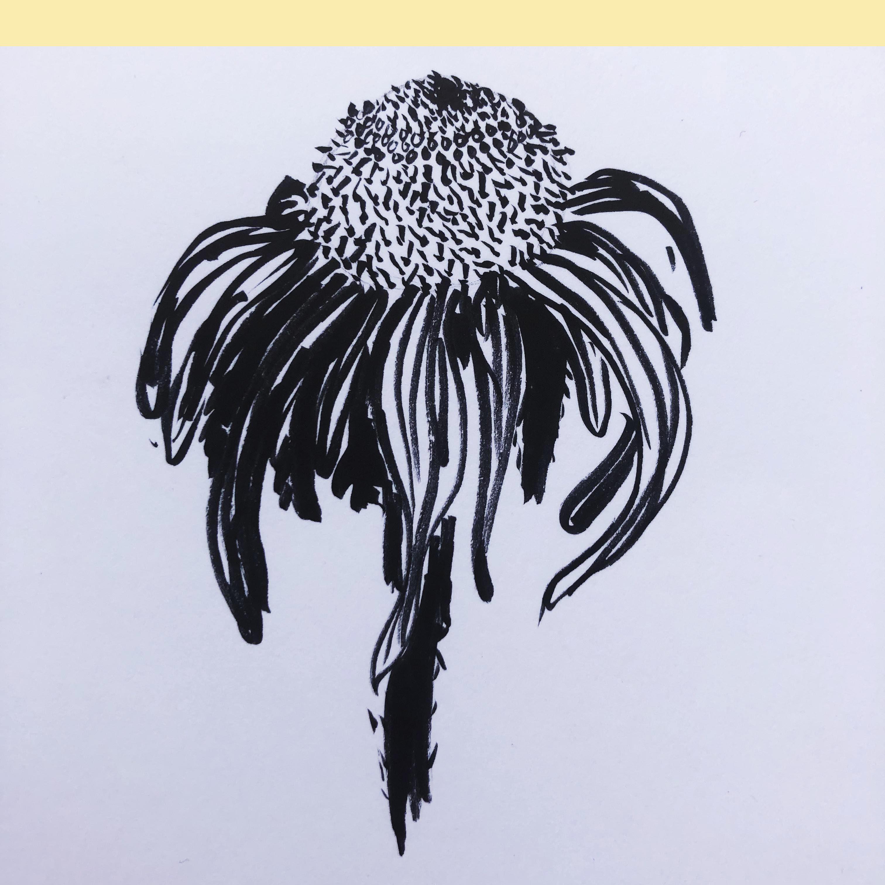 collezione-oldflowers-schizzo